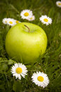 Green apple and daisy flowers Royalty Free Stock Images