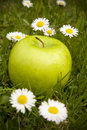 Green apple and daisy flowers Stock Image