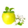 Green apple fruit and apple tree blossom Royalty Free Stock Photos