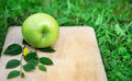 Green apple in the grass Royalty Free Stock Images
