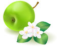 Green apple with leaf and flowers Royalty Free Stock Photos