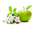 Green apple with spring flowers Royalty Free Stock Photos