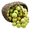 Green apples in basket isolated Stock Photo
