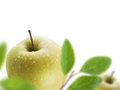 Green apples juicy with water drops selective focus Stock Image
