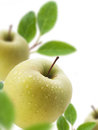Green apples juicy with water drops selective focus Royalty Free Stock Photography