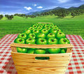 Green apples in a wooden box on a table, with landscape and apple-trees at the background. Royalty Free Stock Photo