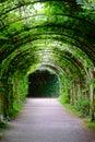 Green arcade coridor a in the garden Royalty Free Stock Photography