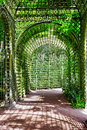 Green archway in a garden. Royalty Free Stock Photo