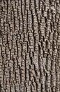 Green Ash Bark Royalty Free Stock Photo