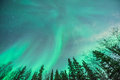 Green. Aurora borealis swirling behind line pine and birch trees Royalty Free Stock Photo