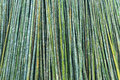 Green background bamboo of fresh hard Stock Image