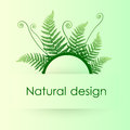 Green background with fern leafs vector Stock Photos