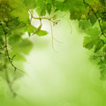 Green background with grape Royalty Free Stock Photo