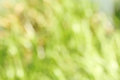 Green background of grass Stock Image