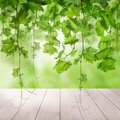 Green Background with Green Grape Leaves, Grapevine and White Em Royalty Free Stock Photo