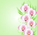 Green background with orchids vector pink Royalty Free Stock Images