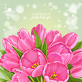 Green background of pink tulips lush Royalty Free Stock Photo