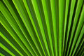 Green background texture of palm leaf tropical tree Stock Photography