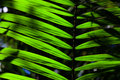 Green backlit leaf in the jungle Royalty Free Stock Photo