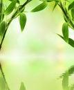 Green bamboo Royalty Free Stock Photo