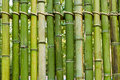 Green bamboo fence background Stock Image