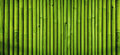 Green bamboo fence texture background, bamboo texture panorama Royalty Free Stock Photo