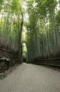 Green bamboo forest in Arashiyama, Japan Royalty Free Stock Photo