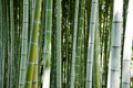Green bamboo forest background Stock Image