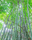 Green bamboo forest with morning sunlight Stock Photos