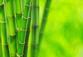 Green bamboo green background Stock Photos