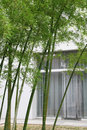 Green bamboo and house Stock Image
