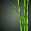 Green bamboo illustration of a background with Stock Image