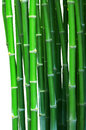 Green bamboo isolated white Royalty Free Stock Photo