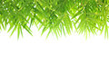 Green bamboo leaf border design on white background Stock Photo