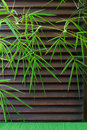 Green bamboo leaf wooden background. Copy space.