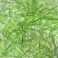 Green bamboo leaves background or texture Royalty Free Stock Photos