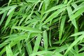 stock image of  Bamboo, leaves, background, green, wall, natural