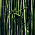 Green bamboo with leaves and black background Stock Photo