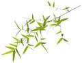 Green bamboo leaves isolated on white Royalty Free Stock Photo