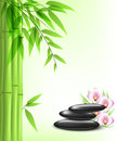 Green bamboo and spa stones vector background with Royalty Free Stock Photography