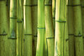 Green bamboo stems background selective focus on front Royalty Free Stock Images