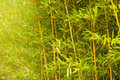 Green bamboo stems Royalty Free Stock Photo