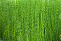Green bamboo the thicket of young shoots Royalty Free Stock Photos
