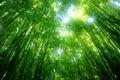 Zelený bambus strom