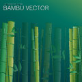 Green bambu beautiful background or wallper Stock Photos