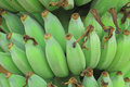Green banana bunch Royalty Free Stock Photos