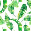 Green banana palm leaves on the white background.Tropic seamless pattern. Tropical jungle foliage illustration. Exotic plants. Sum