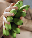Green Bananas Artistic Composition Stock Images