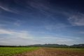 Green bean farm gaysorn landscape with a mountain backdrop Stock Images