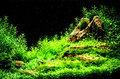 Green beautiful planted tropical freshwater aquarium Royalty Free Stock Photo